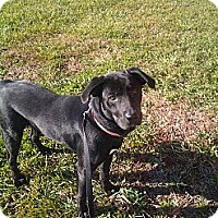 Adopt A Pet :: HOLLY ( Courtesy Post) - Upper Sandusky, OH
