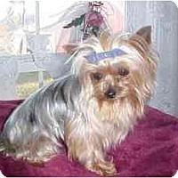 Adopt A Pet :: Karlie - Mooy, AL
