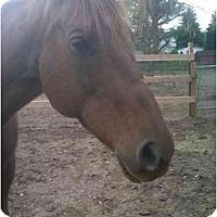 Adopt A Pet :: Nena - Northford, CT