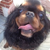 Adopt A Pet :: Hazel - Cumberland, MD