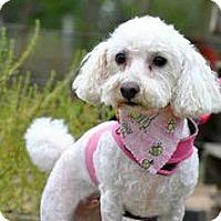 Adopt A Pet :: Kennedy - Austin, TX