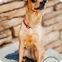 Adopt A Pet :: Beth - Scottsdale, AZ