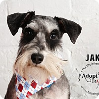 Adopt A Pet :: Jake - Omaha, NE