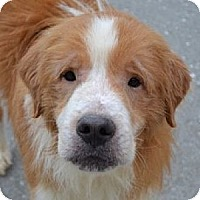Adopt A Pet :: Memphis - White River Junction, VT