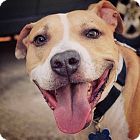 Adopt A Pet :: Chester - Charlotte, NC