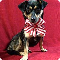 Adopt A Pet :: Miss Cassie - Thomspn, CT