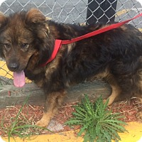 Adopt A Pet :: Marley - Oak Ridge, NJ