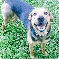 Adopt A Pet :: Axel - Coral Springs, FL