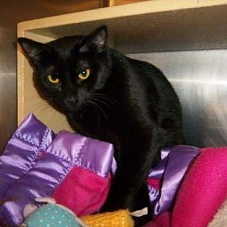 Cat Adoption St Charles Il