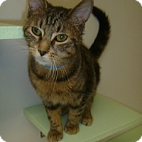 Adopt A Pet :: Shadow - Hamburg, NY