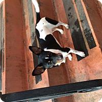 Adopt A Pet :: Maggie - West Orange, NJ