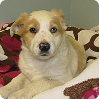 Adopt A Pet :: Danika - Groton, MA