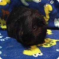 Adopt A Pet :: Jeter (Neutered) - Coral Springs, FL