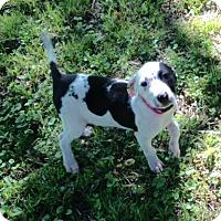 Adopt A Pet :: Dixie - Buffalo, NY