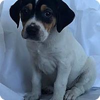 Adopt A Pet :: Tulip - Mooresville, NC