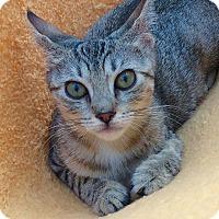 Adopt A Pet :: Dorothy Gish - Brooklyn, NY