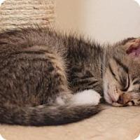 Adopt A Pet :: Sweet Pea - Elkhorn, WI