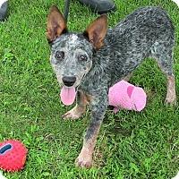 Adopt A Pet :: Jessie - Texico, IL