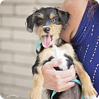 Adopt A Pet :: MacGyver - Kingwood, TX