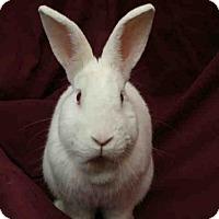 Adopt A Pet :: TOMMY - Urbana, IL