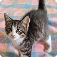 Adopt A Pet :: Oscar - Woodstock, ON