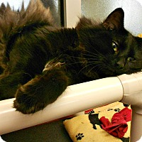 Adopt A Pet :: Smokey - Chesapeake, VA
