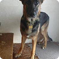 Adopt A Pet :: Classy - Racine, WI