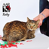 Adopt A Pet :: Ruby - Tomball, TX