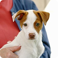 Adopt A Pet :: Freddy - Coronado, CA