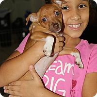 Adopt A Pet :: Kanga - Pompano Beach, FL