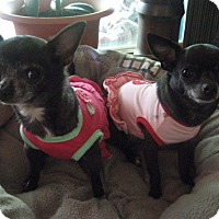 Adopt A Pet :: Jeana and Annie - Union Grove, WI