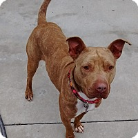 Adopt A Pet :: Layla - Burgaw, NC