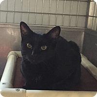 Adopt A Pet :: Sabrina - Lafayette, NJ