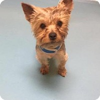 Adopt A Pet :: Chino - Columbia, SC