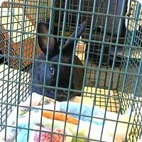 Adopt A Pet :: ALBERT - Sacramento, CA