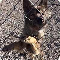 Adopt A Pet :: Oompi - Newport, KY