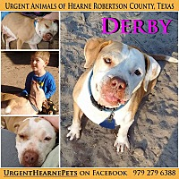 Adopt A Pet :: Derby - Hearne, TX