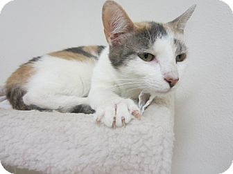 Calico Kitten for adoption in Bunnell, Florida - Penelope
