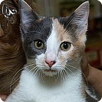 Adopt A Pet :: Sky N - Sacramento, CA