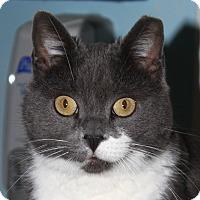 Adopt A Pet :: Mona - North Branford, CT