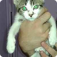 Adopt A Pet :: Anze - Whittier, CA