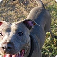 Adopt A Pet :: Andre - Georgetow, TX