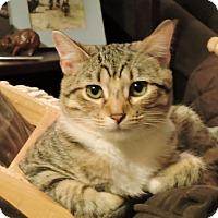 Adopt A Pet :: Melba - St. Louis, MO
