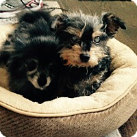 Adopt A Pet :: Sammy & Tootsie - Whitehall, PA