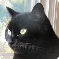 Adopt A Pet :: Ebony - Davis, CA