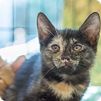 Adopt A Pet :: Gala - New York, NY