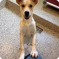Adopt A Pet :: Clyde - Aiken, SC