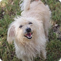Adopt A Pet :: Sara - Helotes, TX