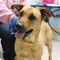 Adopt A Pet :: Baxter - Elyria, OH