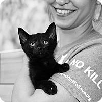 Adopt A Pet :: Snape - Baytown, TX